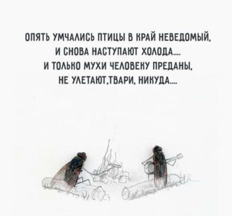 https://blog.sibmama.ru/usrpx/70457/70457_800x745_118791894_2672106752891650_12565d1c1dee2.jpg