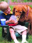 Гельминтозы детей школьного возраста (заражение, гельминтоз, дитя, возраст, детей школьного, школьного возраста...