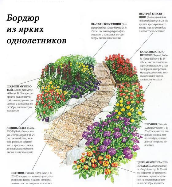 План схема цветников